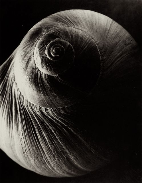 Edward Steichen, The Spiral Shell, France, c. 1921, The Richard and Jackie Hollander Collection